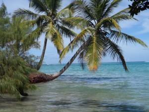 La baie d'Ampanihy, plage avec petits palmiers.