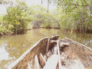 La balade dans la mangrove.