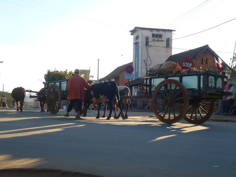 Charrette à Zébus à Antsirabe