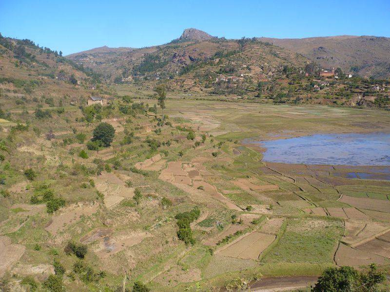 Des rizières entre Antsirabe et Betafo