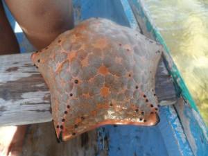 Une étoile de mer à Foulpointe