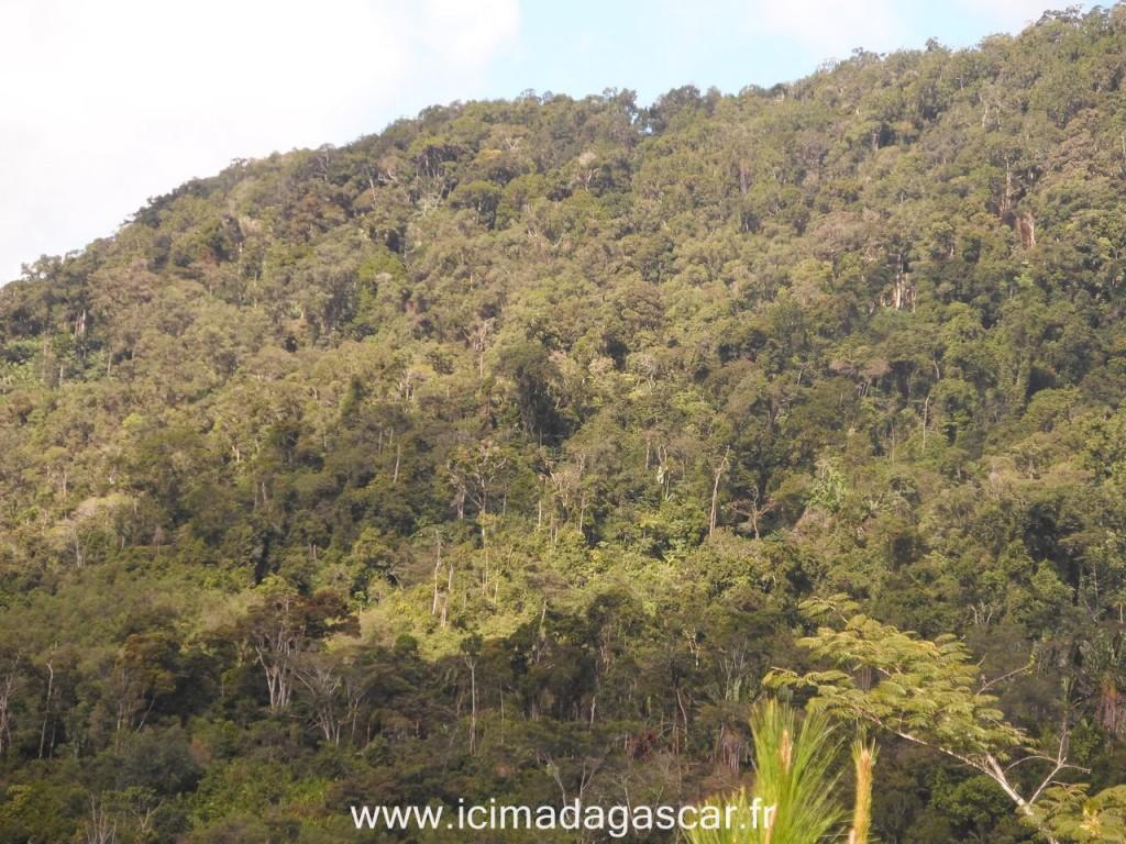 Les forêts typiques de Ranomafana