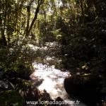 Voici ce que l'intérieur du parc de Ranomafana vous réserve