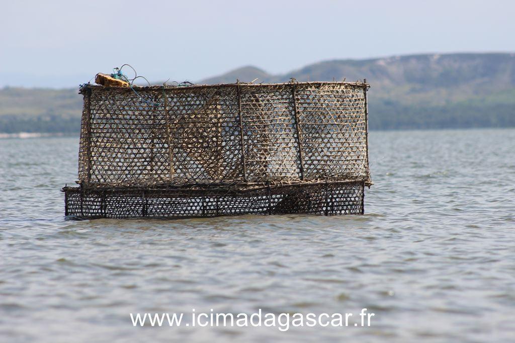 Un piège à poisson