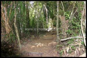 Sentier du parc de Lokobe, Nosy Be