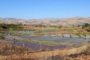 Rizières sur la route de l'Andringitra