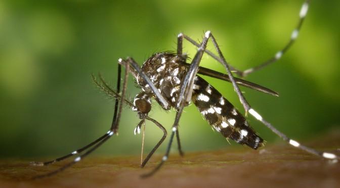 maladie-moustique-madagascar