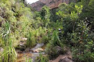 Le canyon est verdoyant et humide