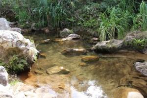 Petit point d'eau, courant dans le canyon des makis