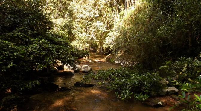 Le parc de Ranomafana